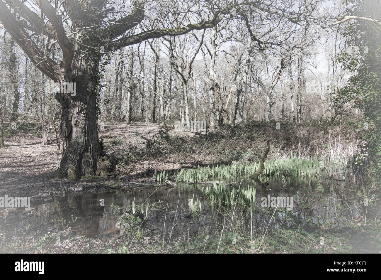 Woodland oasis in muted colours - photo - Stock Image