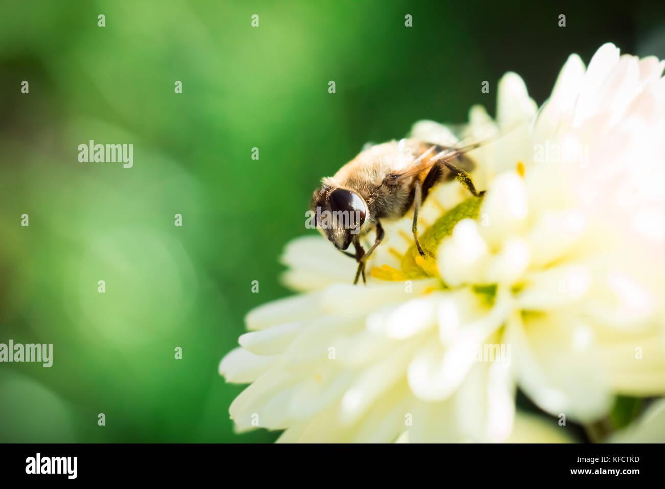 Bee diaries - Stock Image