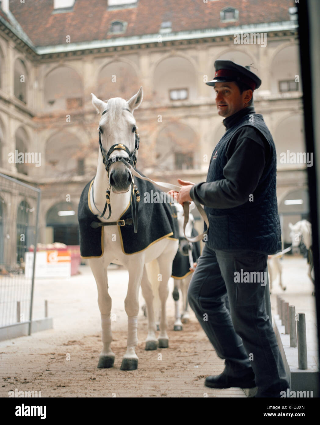 AUSTRIA, Vienna, the famous Lipizzaner Stallions being led out of the stables Stock Photo