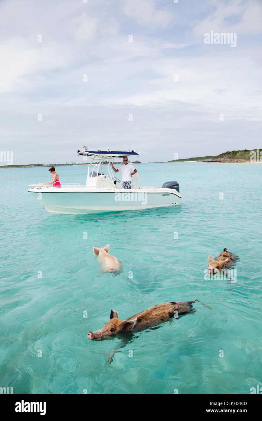 Swimming Pigs Of Bahamas Stock Photos & Swimming Pigs Of
