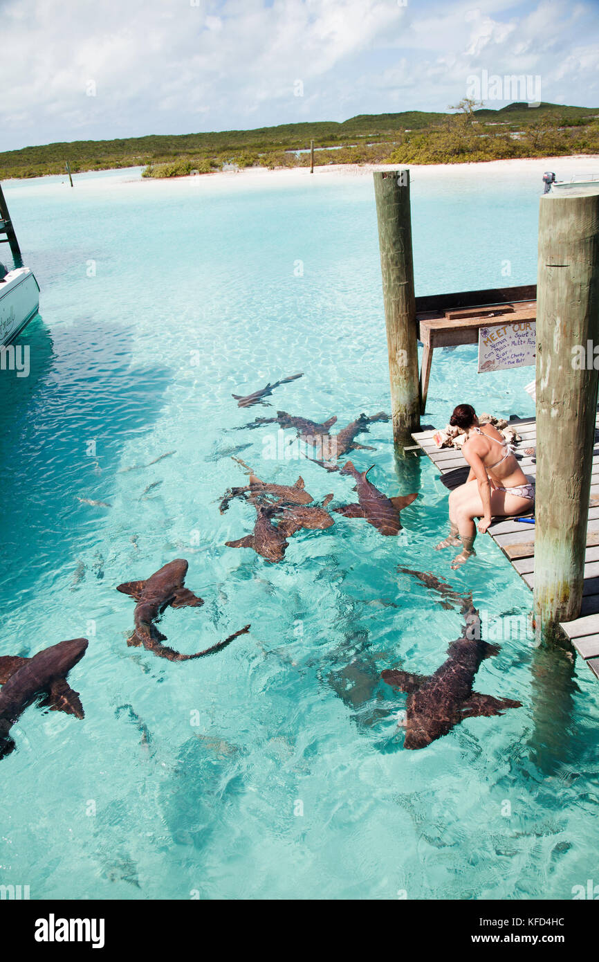 EXUMA, Bahamas  Swimming with docile nurse sharks at the