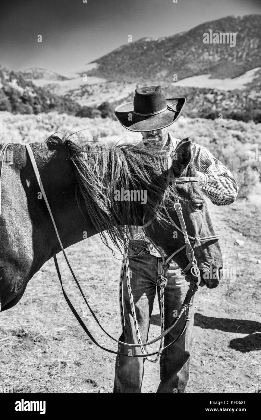 USA, Nevada, Wells, cowboy and wrangler Clay Nannini prepares for a Horse-Drawn Wagon Ride at Mustang Monument, - Stock Image