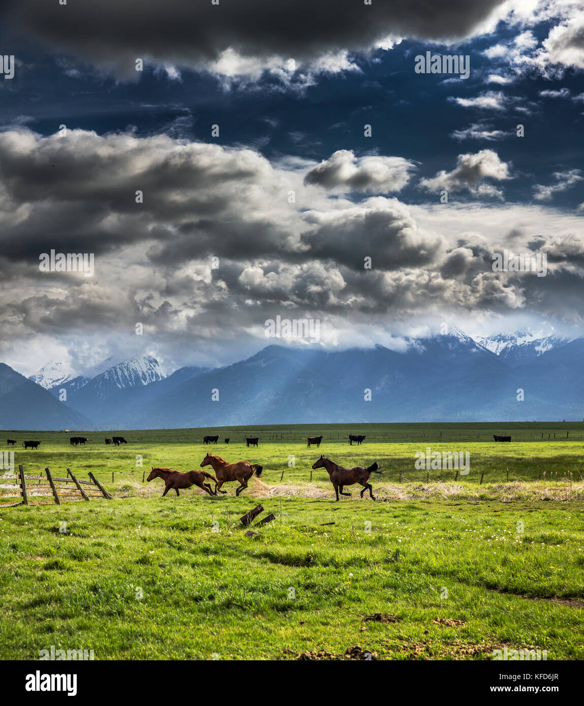 USA, Oregon, Enterprise, horses dry off after the rain stops, the Snyer Ranch in Northeast Oregon, looking towards Stock Photo