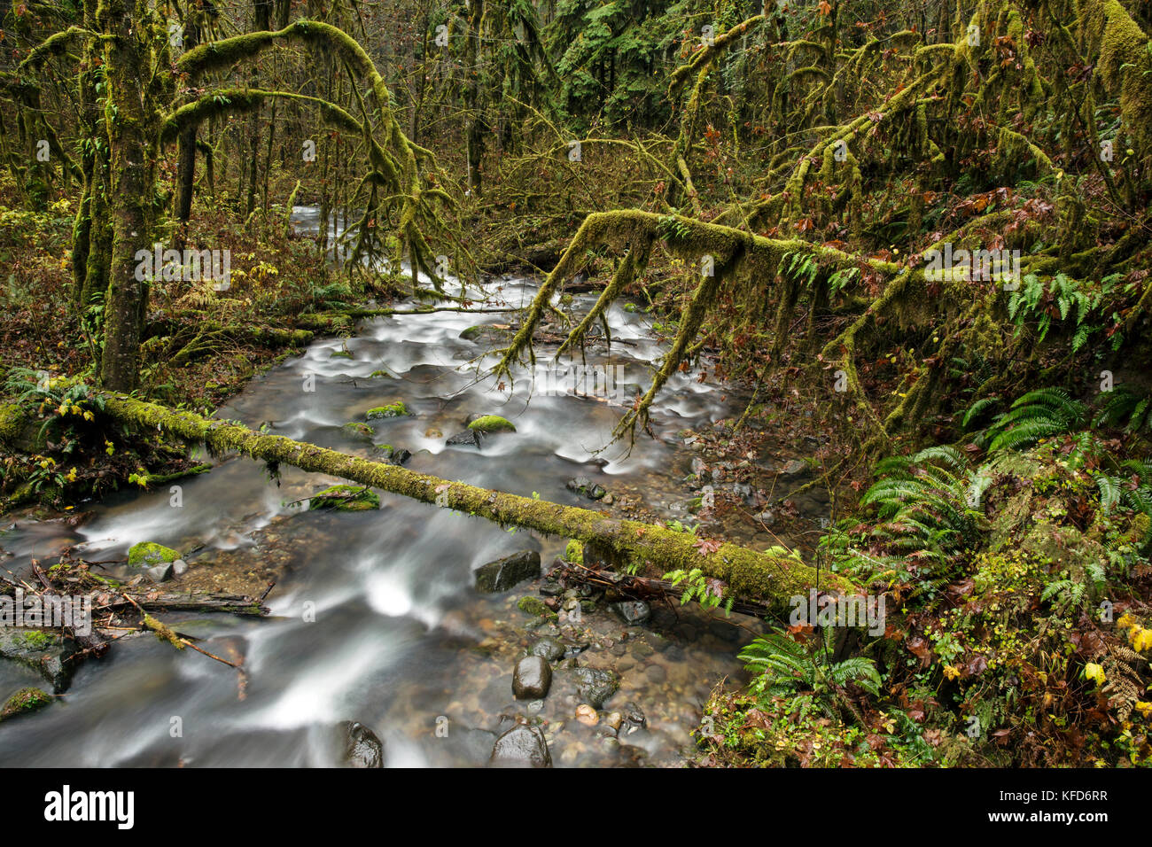 USA, Oregon, Santiam Pass, The Santiam River which is a tributary of