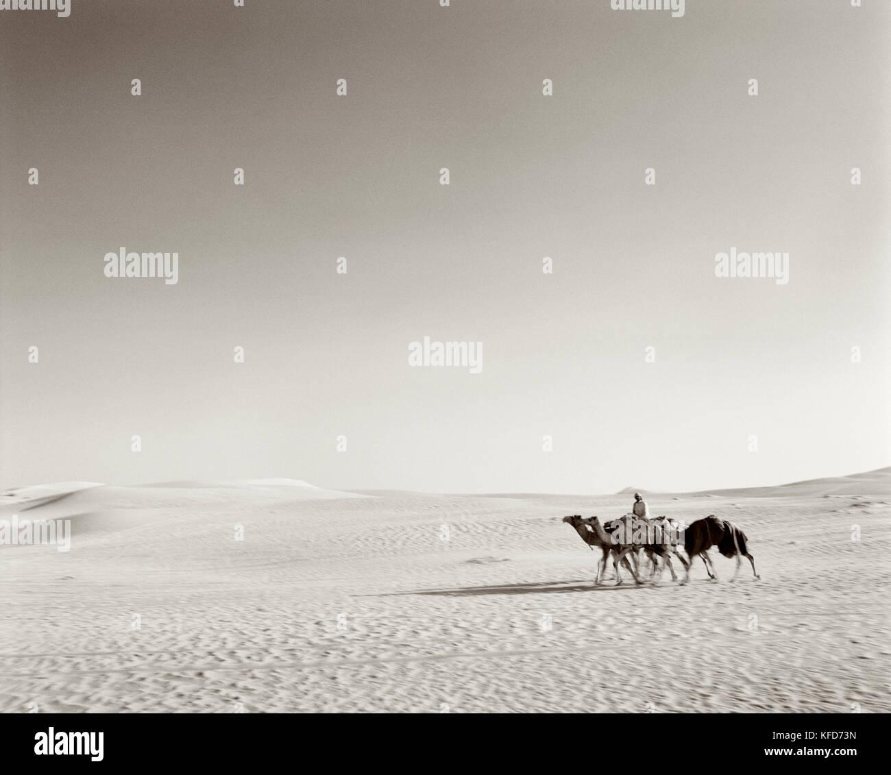 SAUDI ARABIA, Najran, man rides with his camels through The Empty Quarter (B&W) - Stock Image