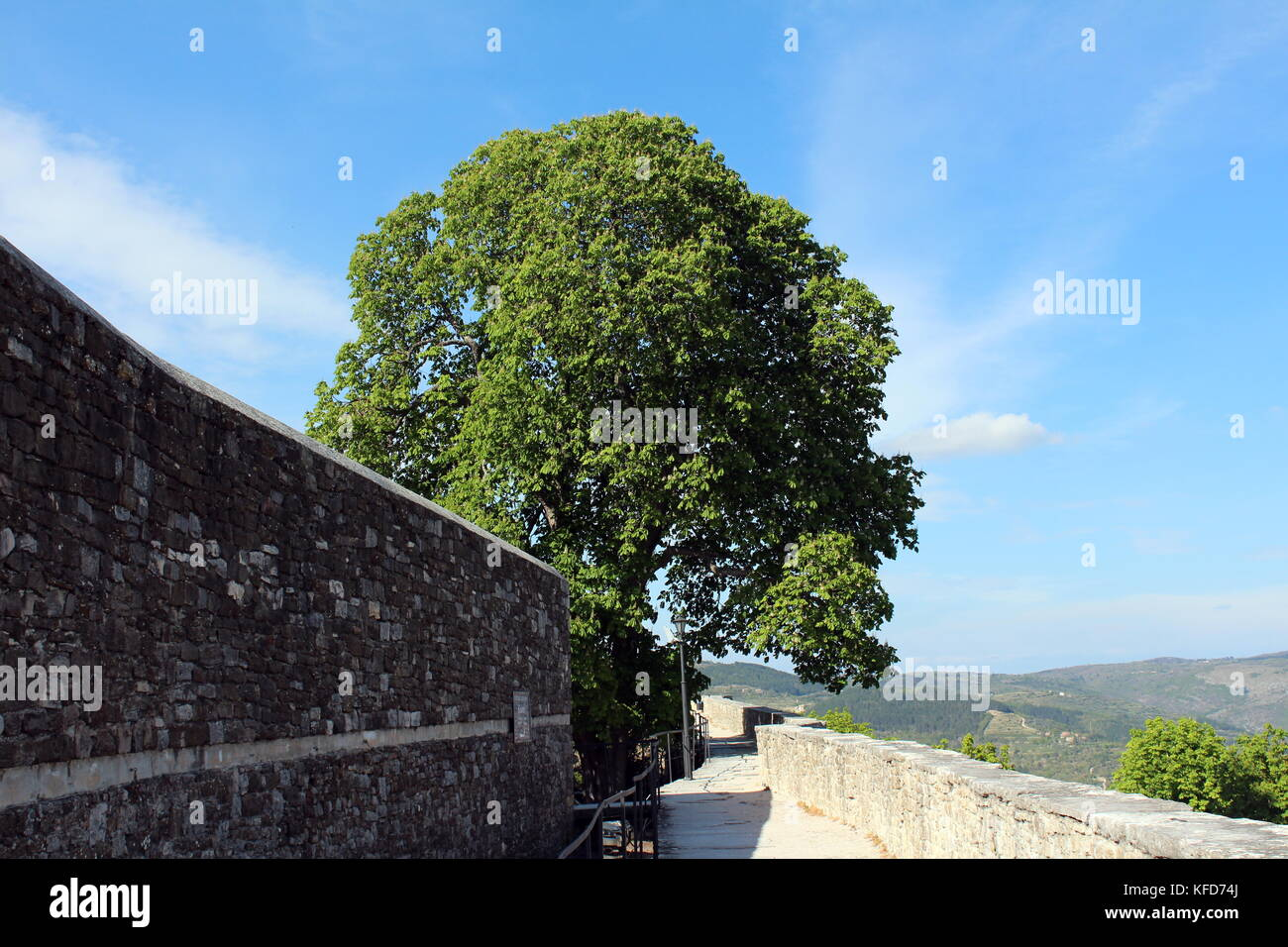 Mighty old tree partially hidden behind traditional stone wall next to stone sidewalk - Stock Image
