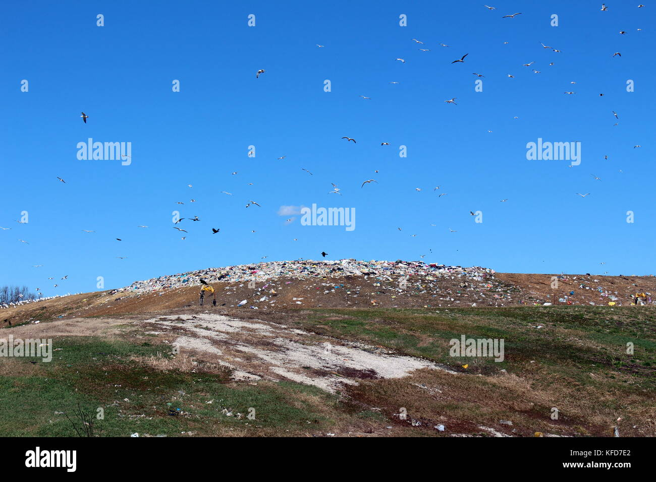 Seagulls flying in circles over large public landfill on a warm sunny day - Stock Image
