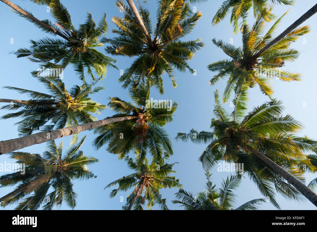 Image of Palm trees taken on Gili Air Island, Lombok, Indonesia - Stock Image