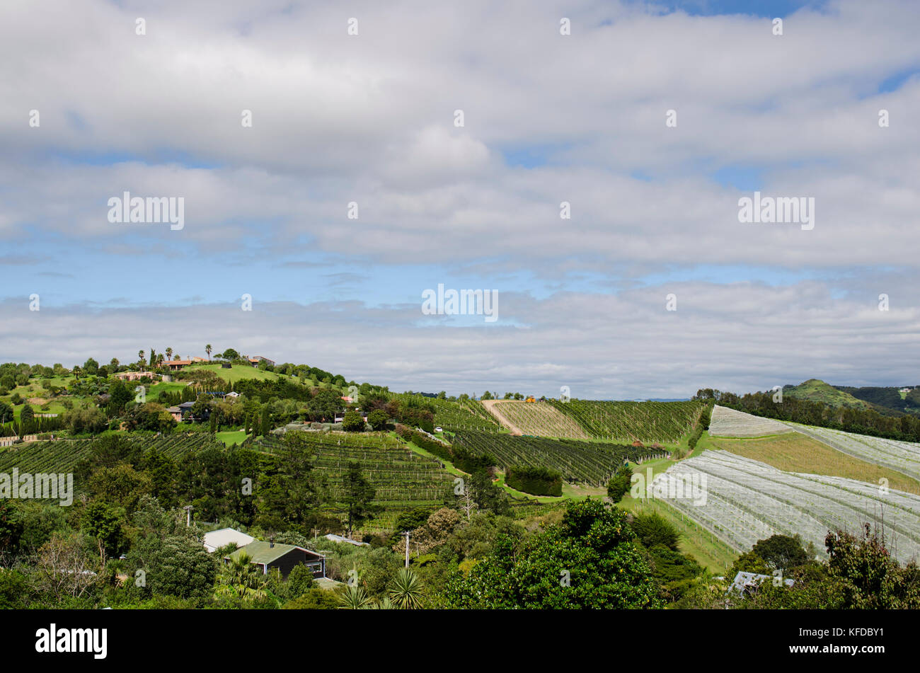 Onetangi vineyard valley in Waiheke Island, Hauraki gulf, New Zealand - Stock Image