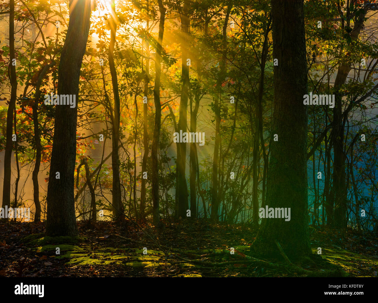 Beautiful morning background in late October forest with visible sun rays in a light haze - Stock Image