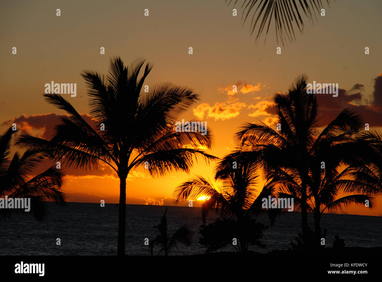 Palm trees silhouetted in the sunset - Ko Olina Resort on Oahu, Hawaii - Stock Image