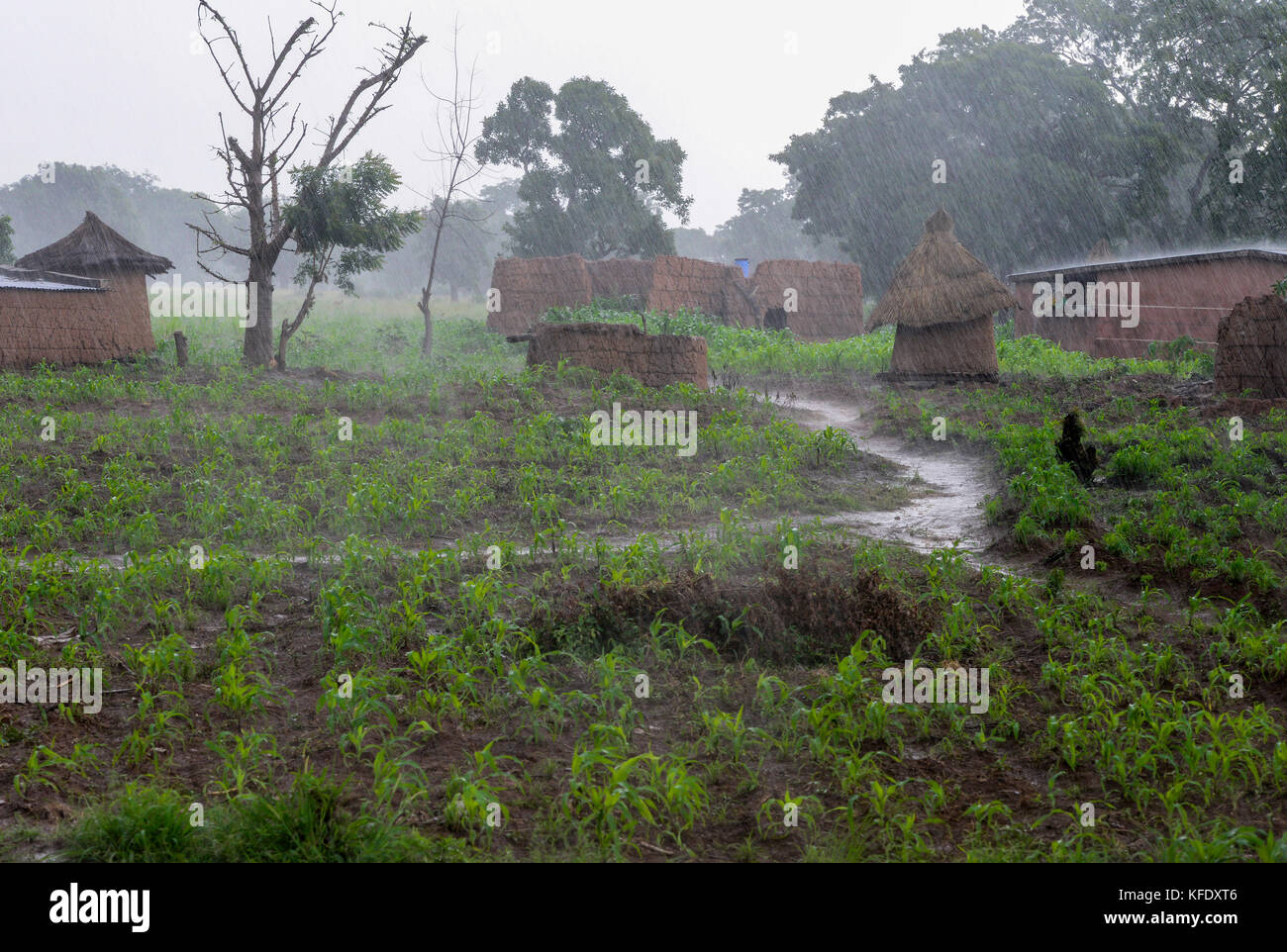 BURKINA FASO, Province Poni, Gaoua, , village and maize field in raining season / Dorf und Maisfeld in der Regenzeit - Stock Image