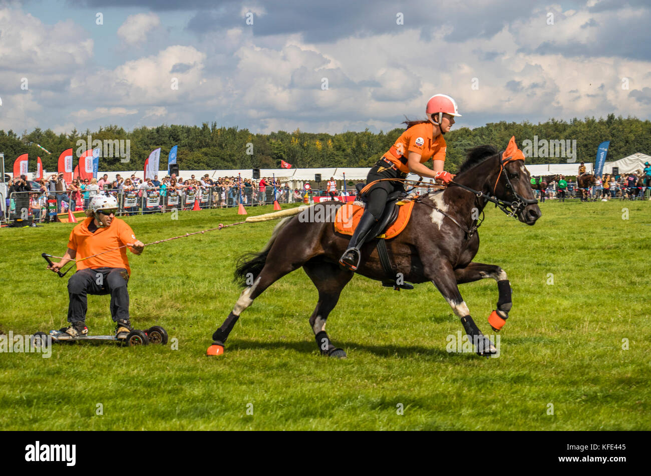 Horseboarding at Cheshire and Country fair Tabley Showground Cheshire UK - Stock Image