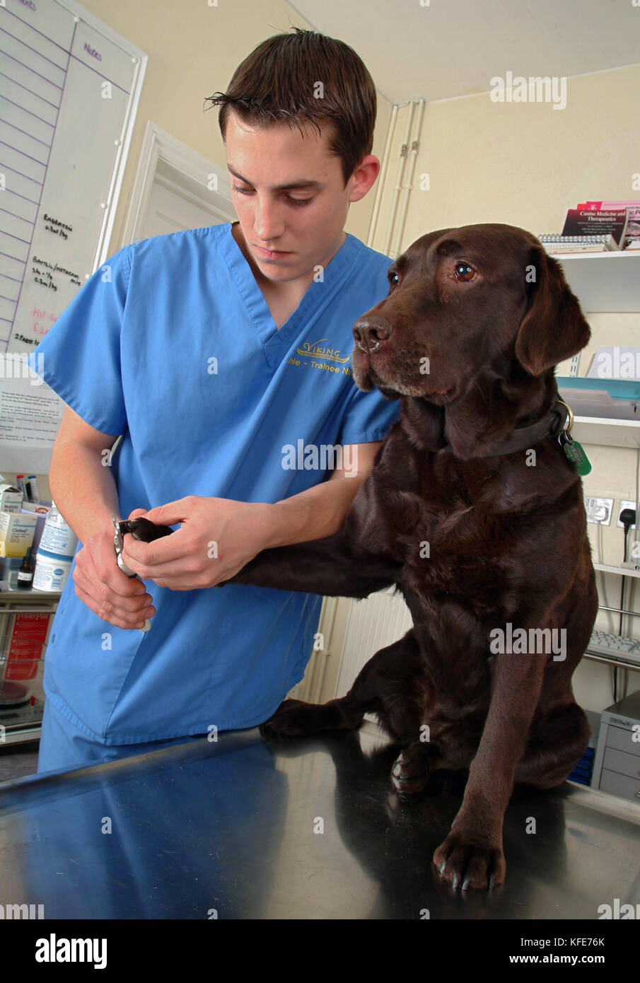 Trainee veterinary nurse, Jamie Burt with vet Maria Lowe at  Viking Veterinary Surgeons, Bristol. - Stock Image