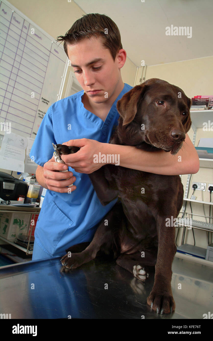 Trainee veterinary nurse, Jamie Burt with vet Maria Lowe at  Viking Veterinary Surgeons, Bristol. - Stock Image