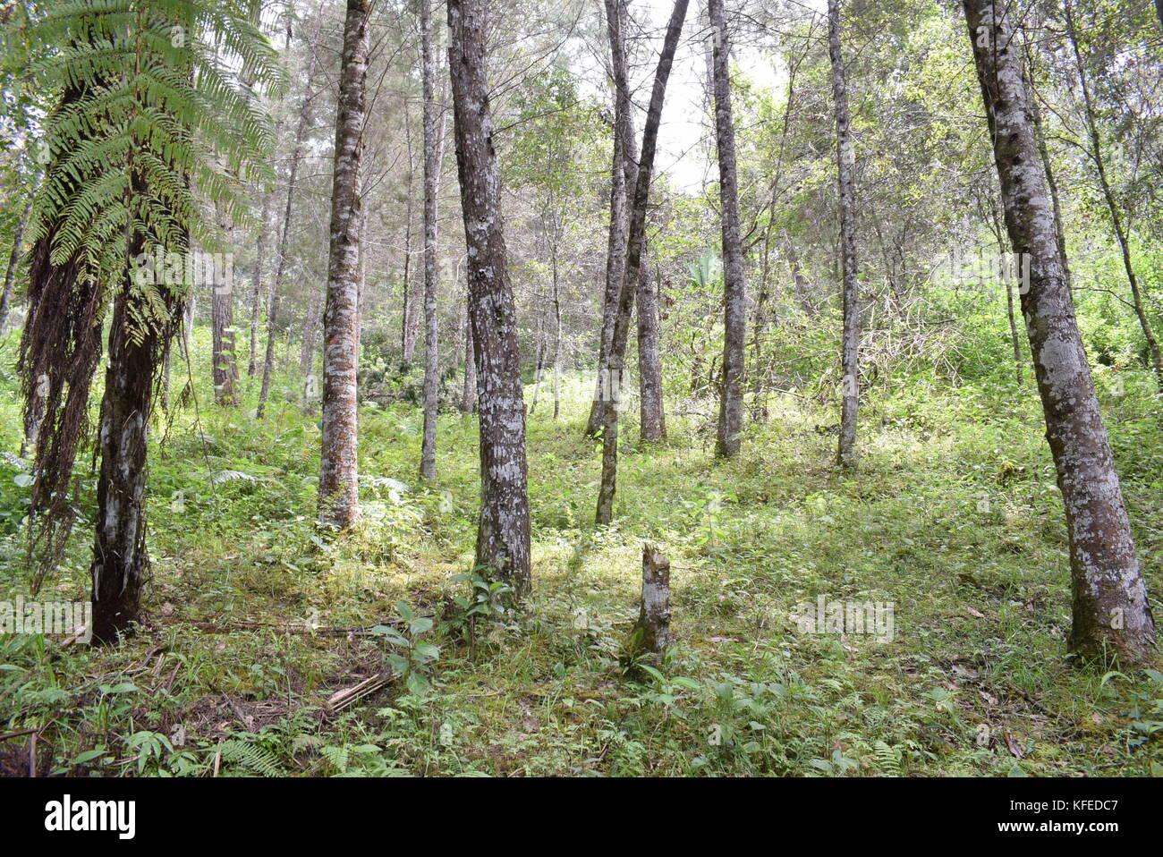 Naturaleza en Guatemala Stock Photo