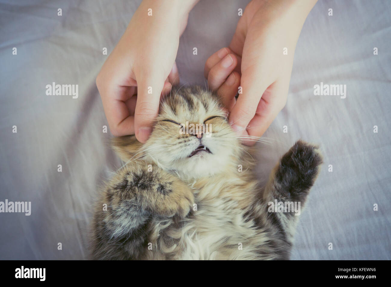 woman hand petting or massage a Persian kitty cat head, love to animals. vintage photo and film style. - Stock Image