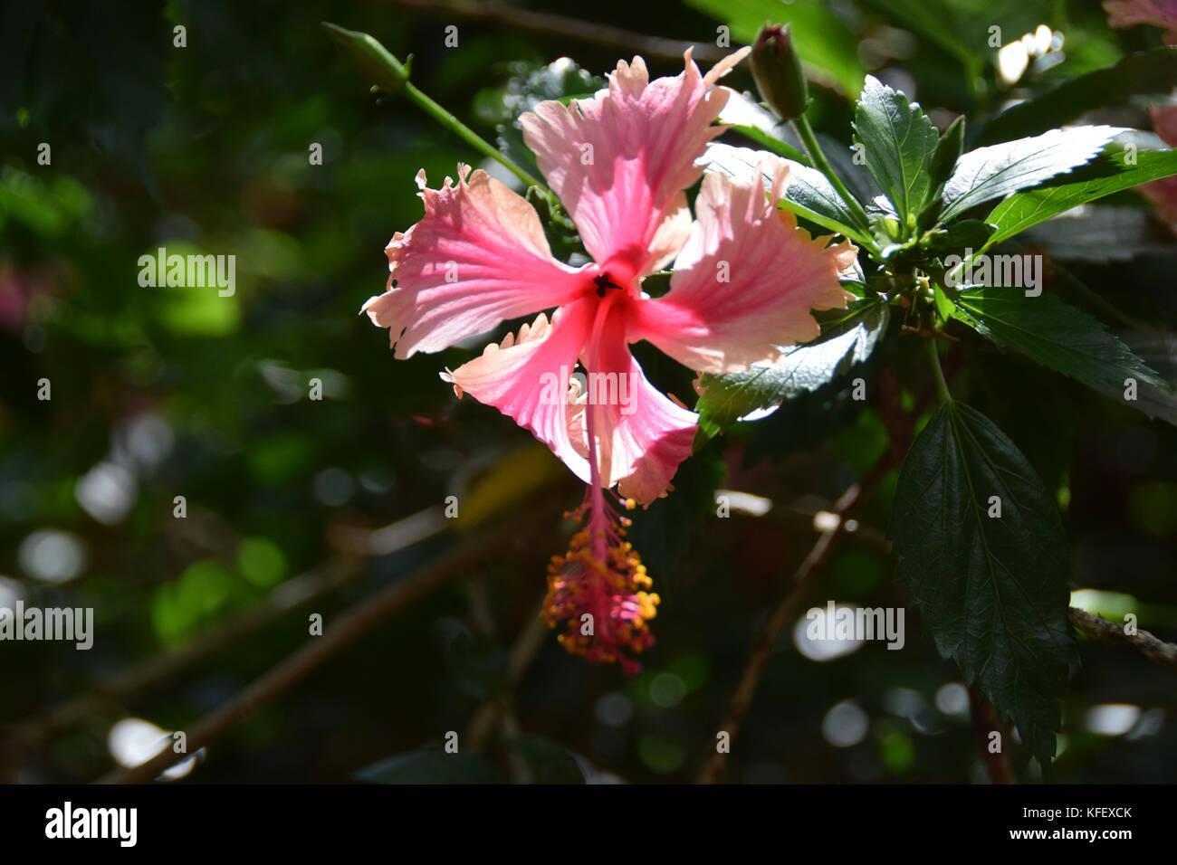 Koko Crater Botanic Garden - Oahu, HawaiiStock Photo