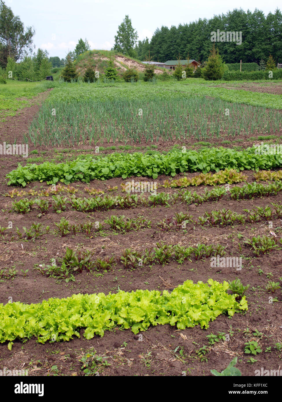 Mixed vegetable furrows in the garden on summer Stock Photo