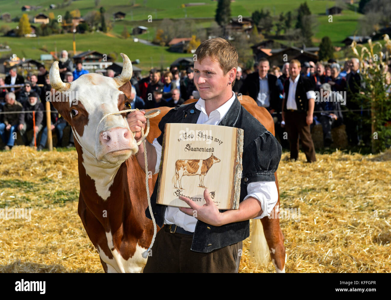 Gstaad, Switzerland. 28th Oct, 2017. The owner of the Swiss Fleckvieh cow Falk proudly shows an award received the - Stock Image