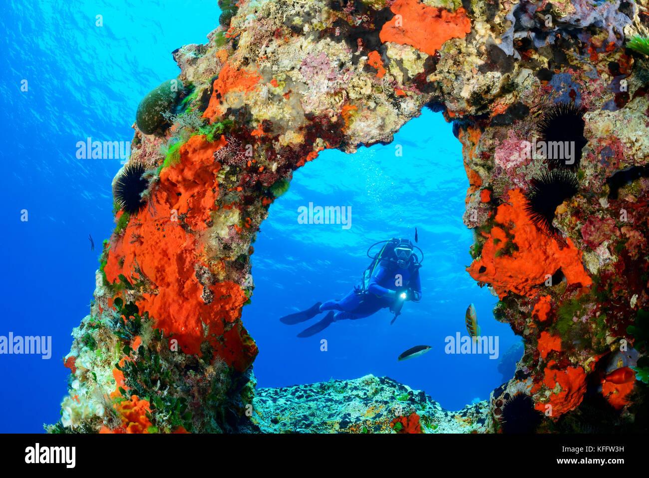 Coralreef with Arch and scuba diver, Adriatic Sea, Mediterranean Sea, Island Lastovo, Dalmatia, Croatia, MR Yes - Stock Image