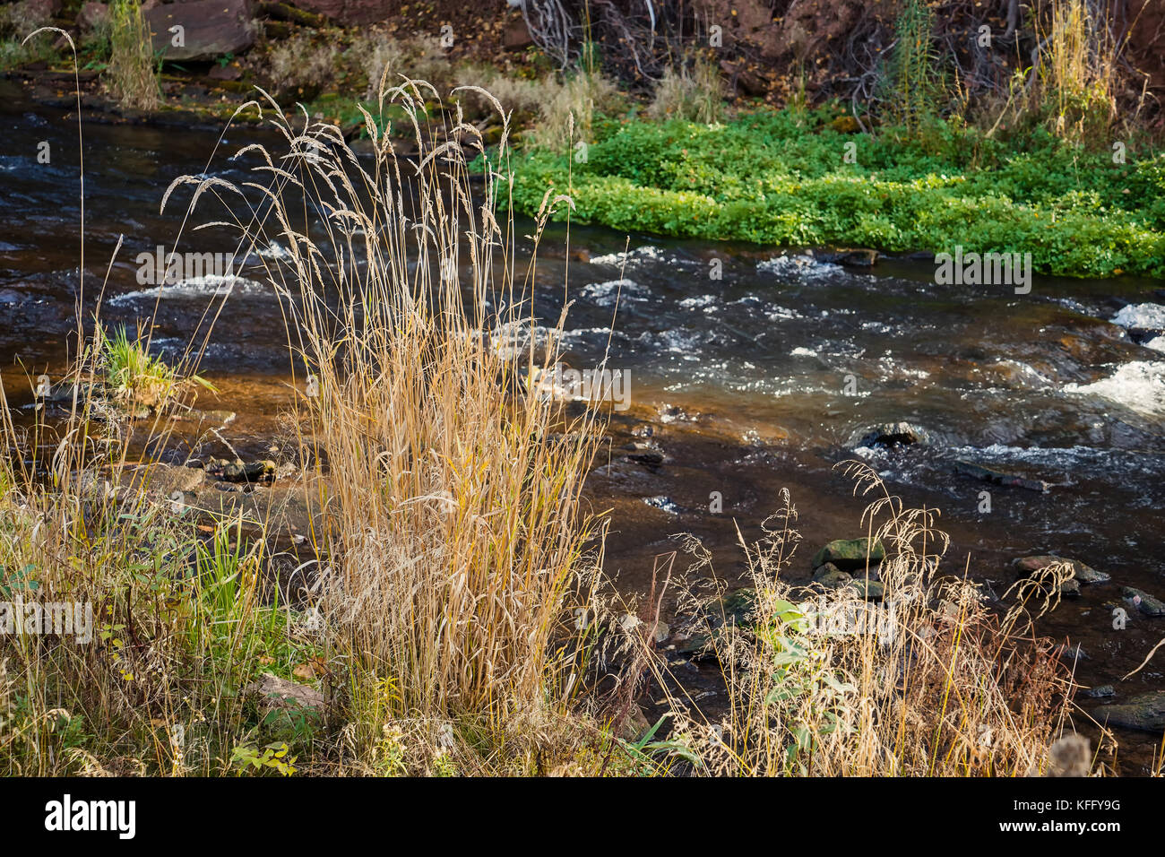 Vegetation along the shore of a small river in autumn. - Stock Image