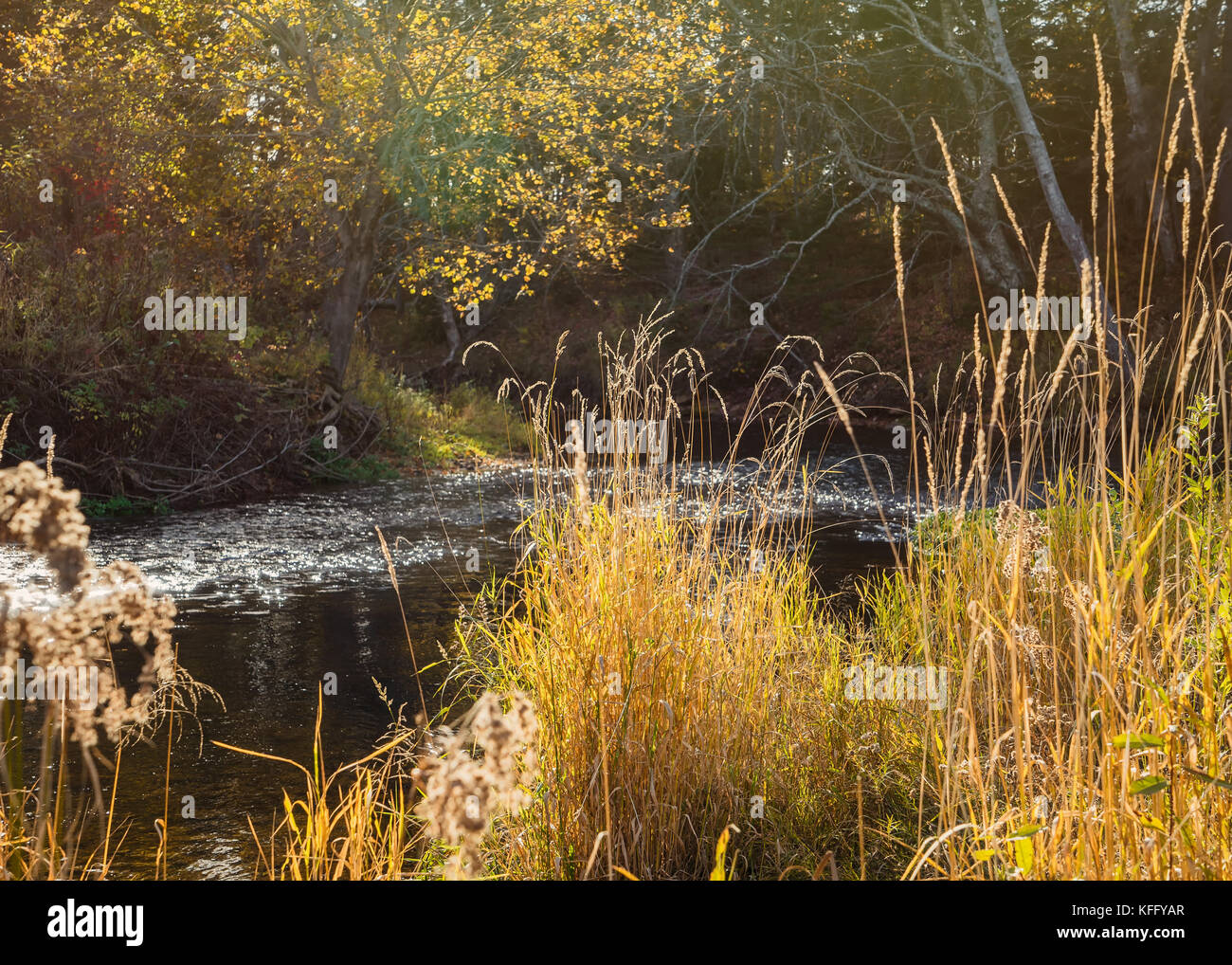 Sun shining on vegetation along the shore of a small river in autumn. - Stock Image