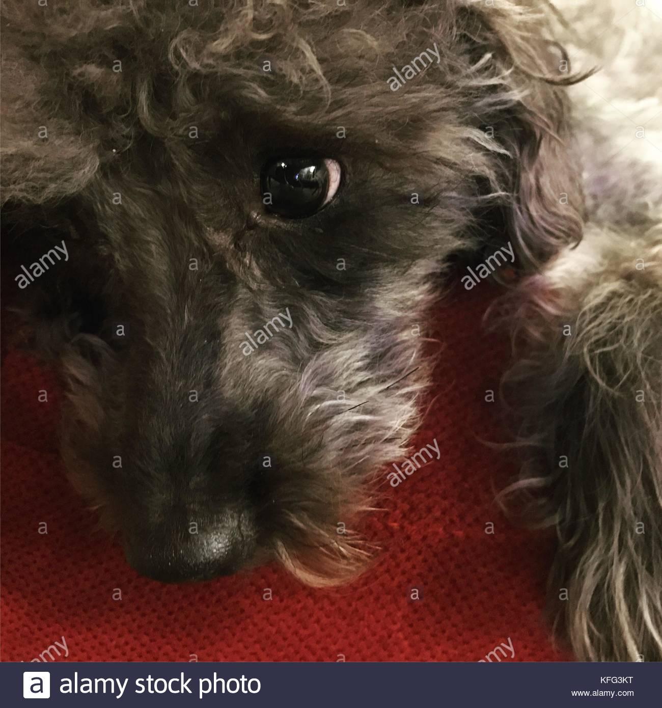 Dog with sad eyes. - Stock Image