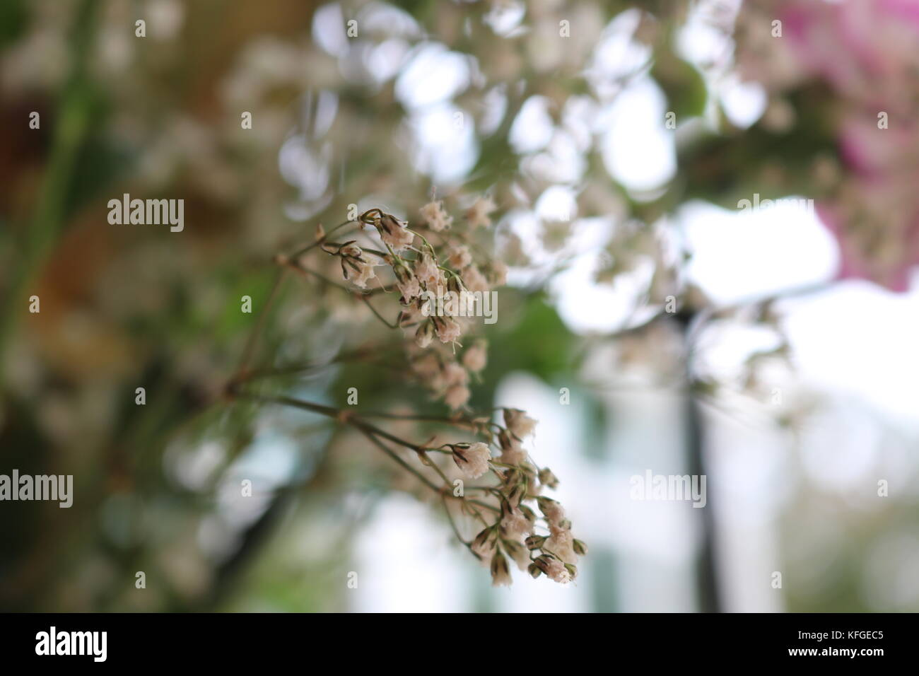 Up close shots of flowers with background blur and contrast. Nature and wildlife greenery indoors. capturing nature - Stock Image