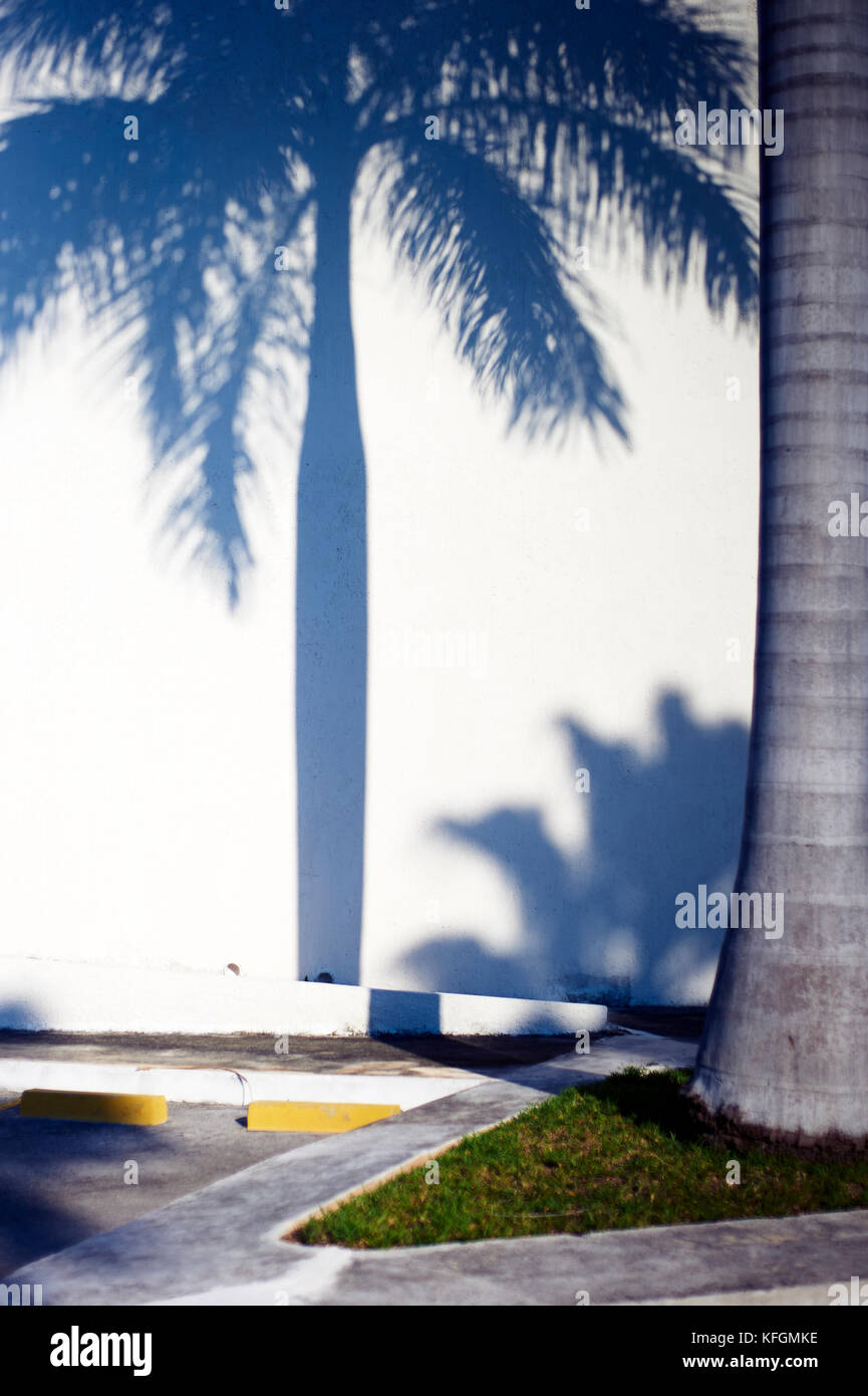 Palm tree shadow projected over white wall symbolizing the struggle between human progress and nature - Stock Image
