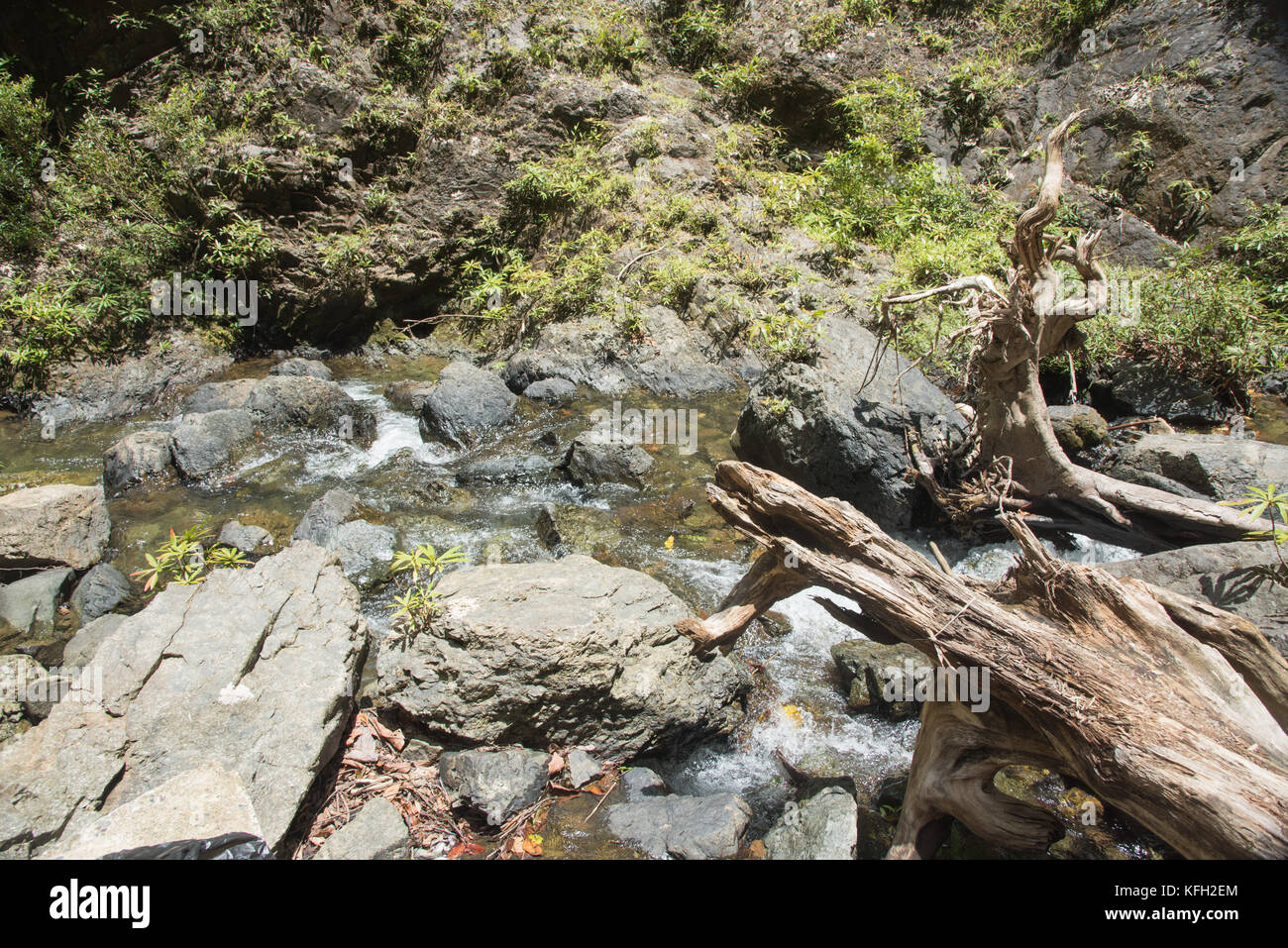 Detail of rocky stream with tree roots in the remote tropical rainforest of Suva, Fiji - Stock Image