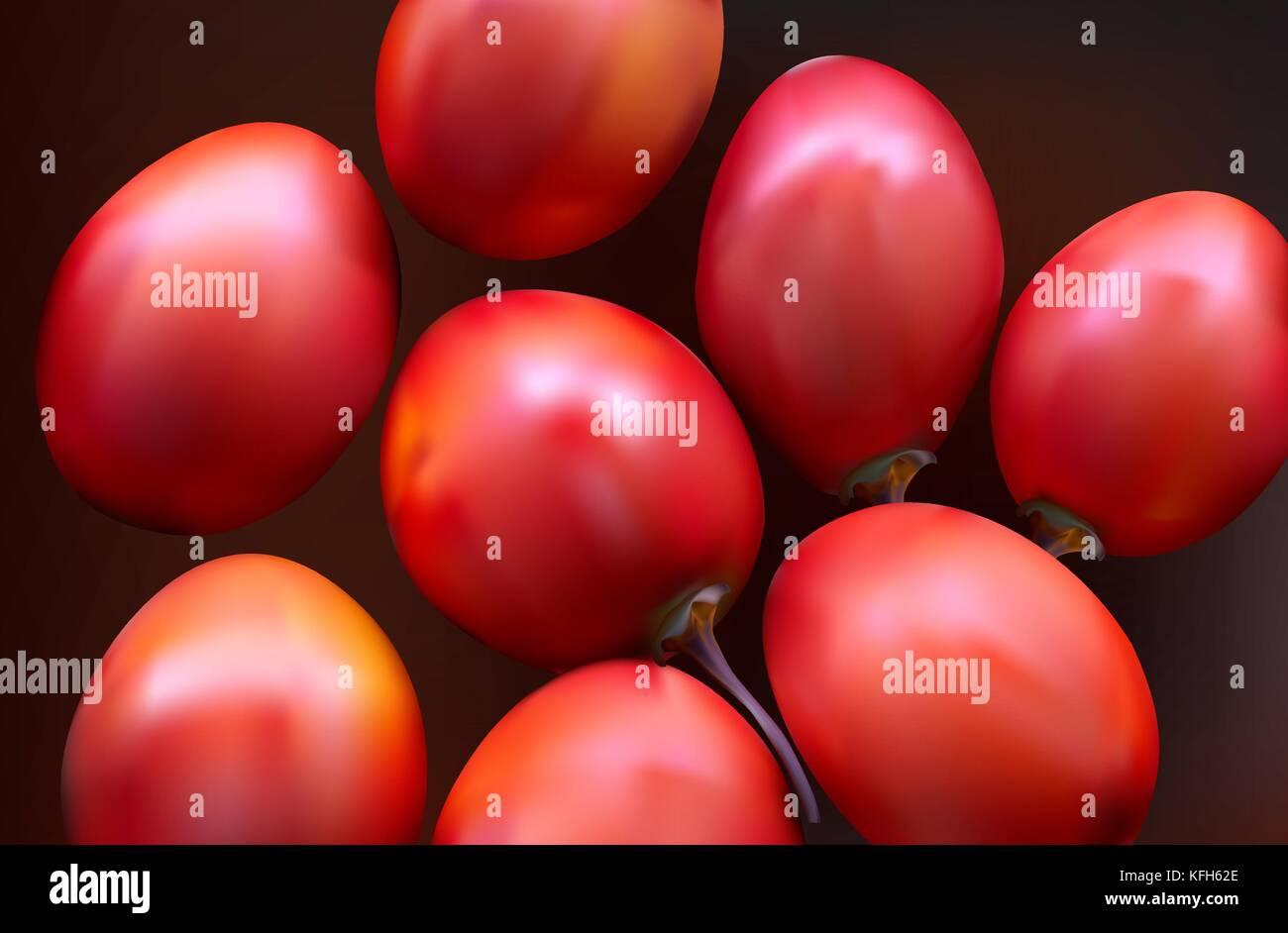 New Zealand evergreen tree fruit vegetable, Tamarillo - Stock Vector