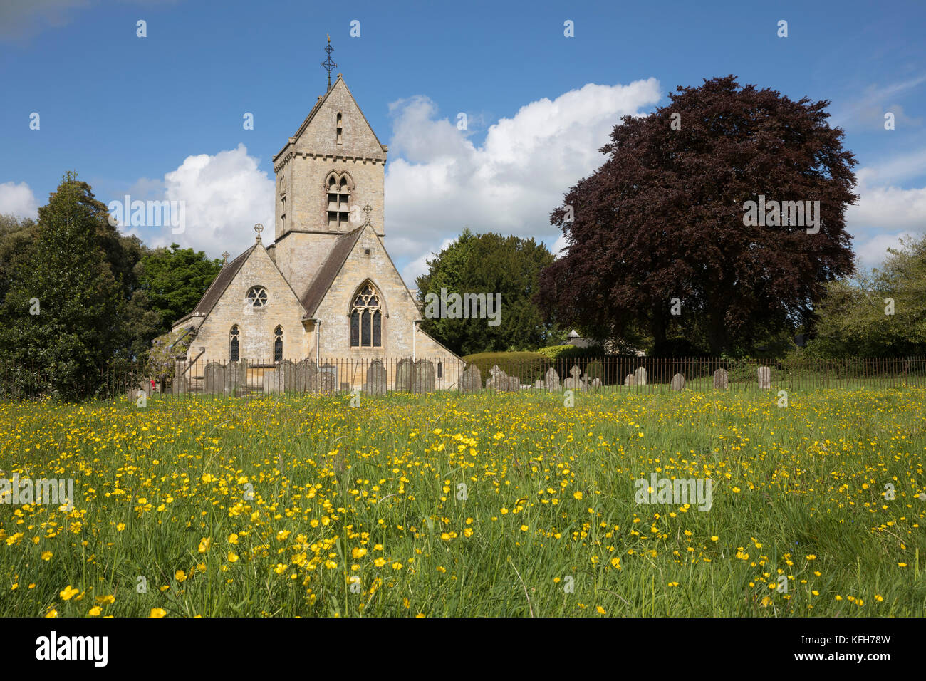 St Nicholas's church and field of yellow buttercups in spring, Hatherop, Cotswolds, Gloucestershire, England, - Stock Image