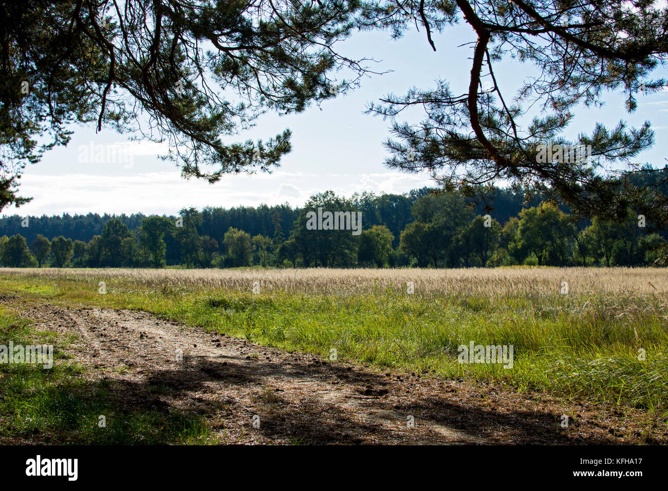Coniferous forest and meadow under a blue sky with clouds in southern Moravia in the Czech Republic Stock Photo