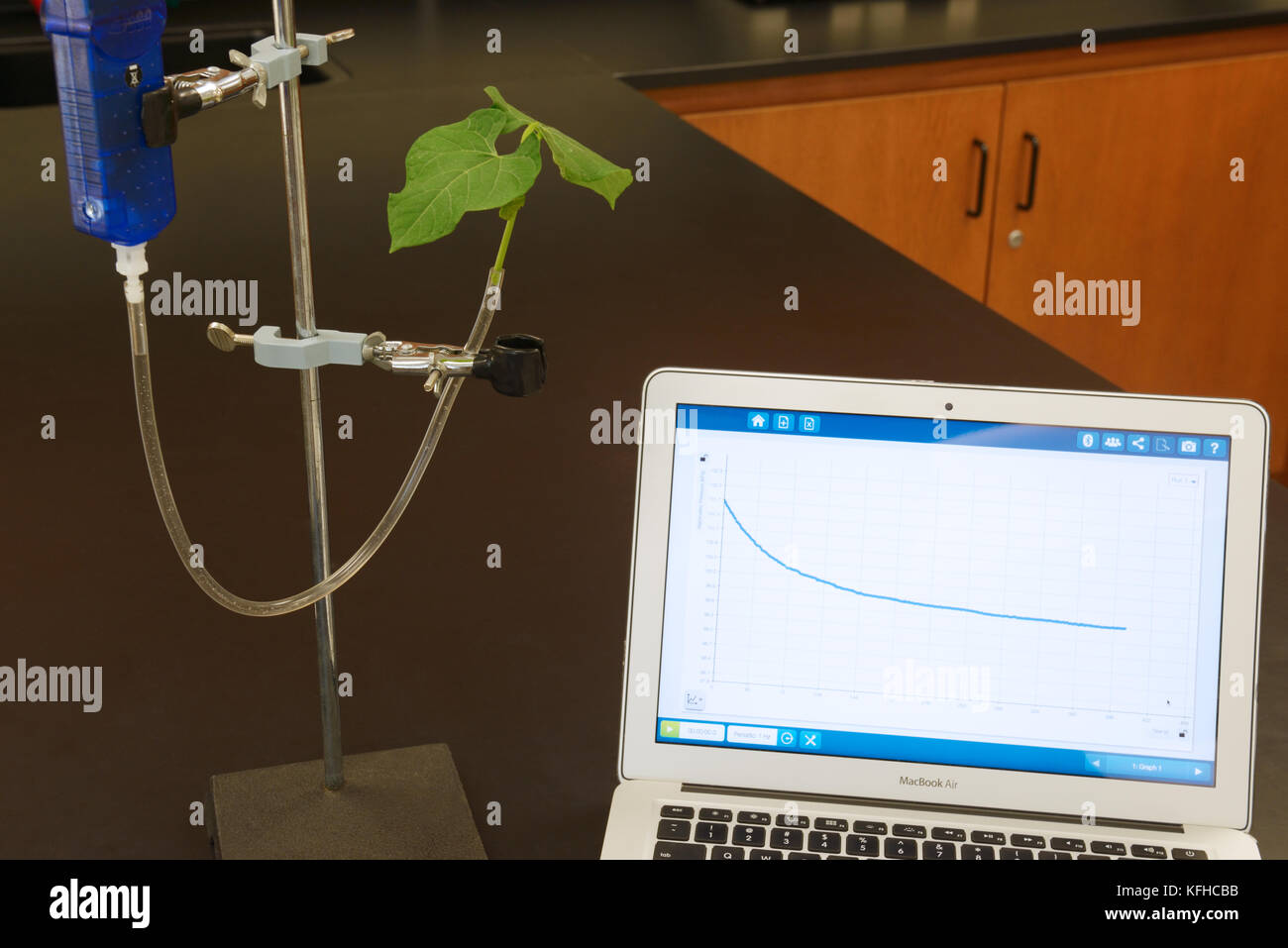 Transpiration plant experiment using computer interfaced sensor with graph of results showing water loss (plant - Stock Image