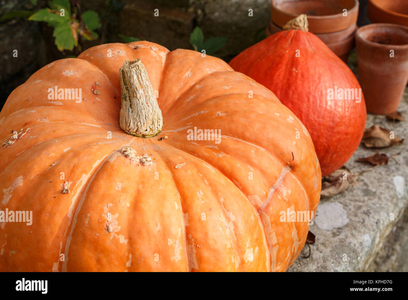 Pumpkins on the coping of a well in a garden during autumn - Stock Image