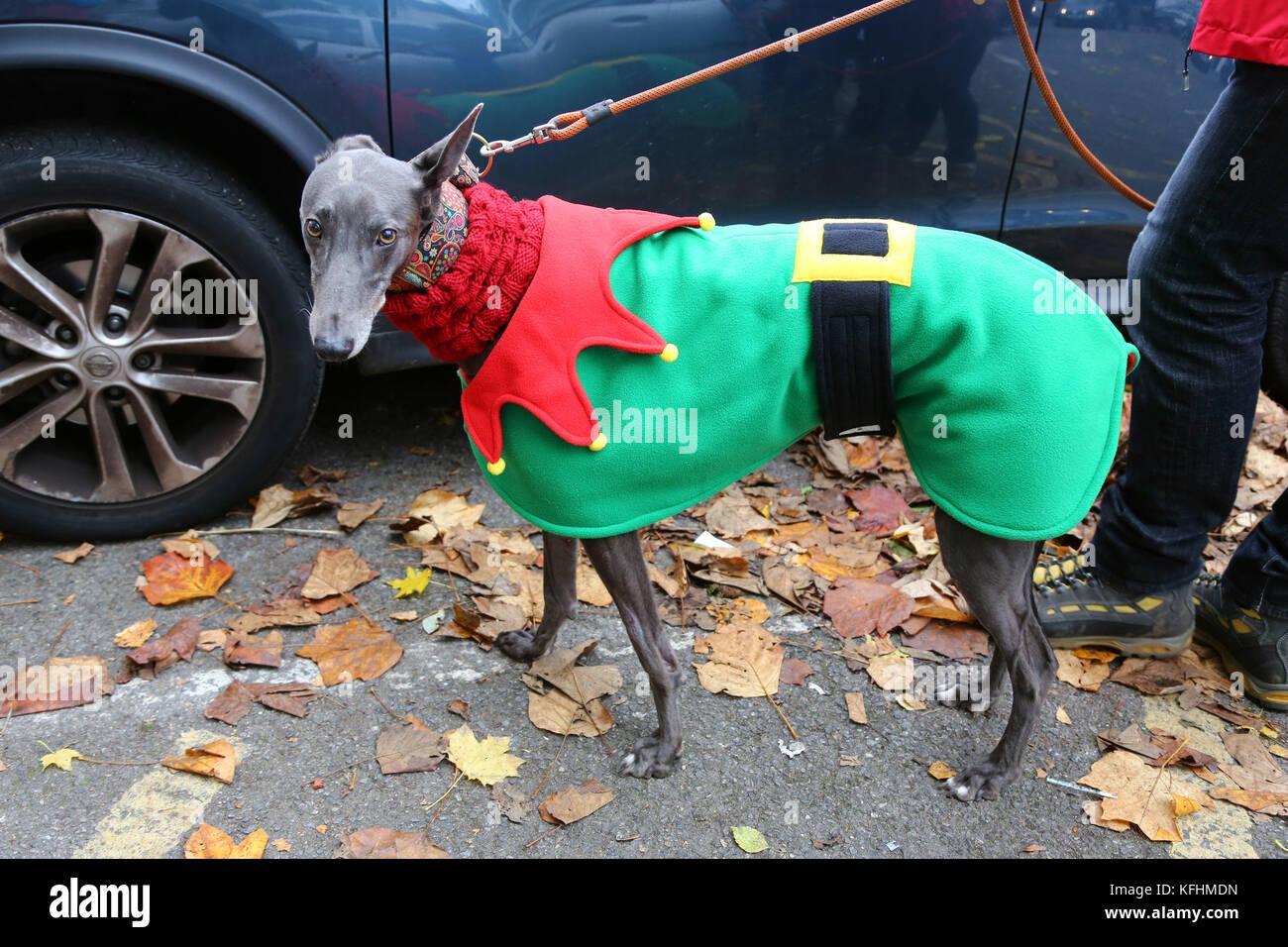 London, UK. 29th Oct, 2017. 99 The Greyhound Looks Elegant In Green
