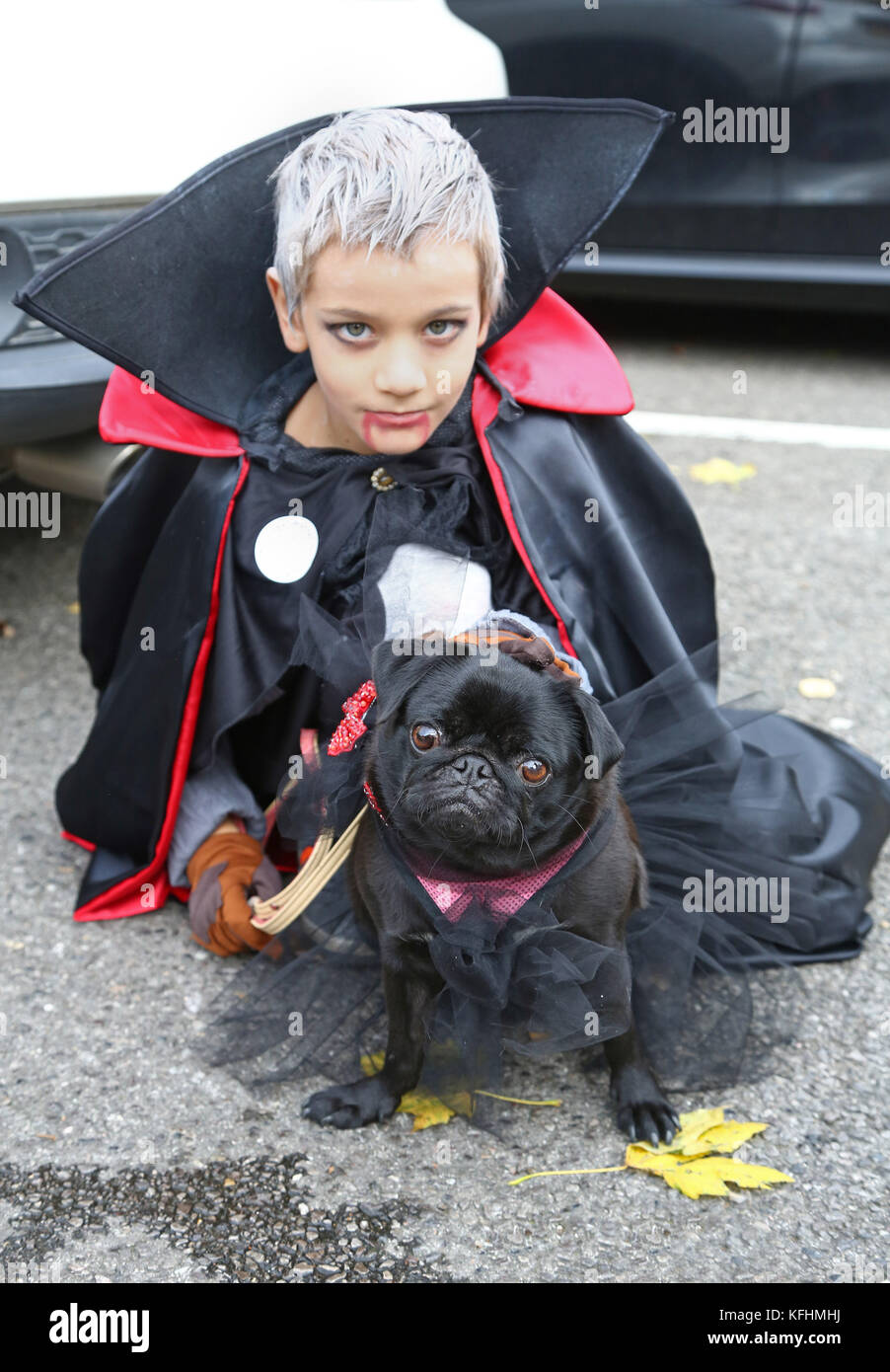 London, UK. 29th Oct, 2017. Gita the Pug with her owner Ivan at the All Dogs Matter Halloween Dog Walk, Hampstead - Stock Image