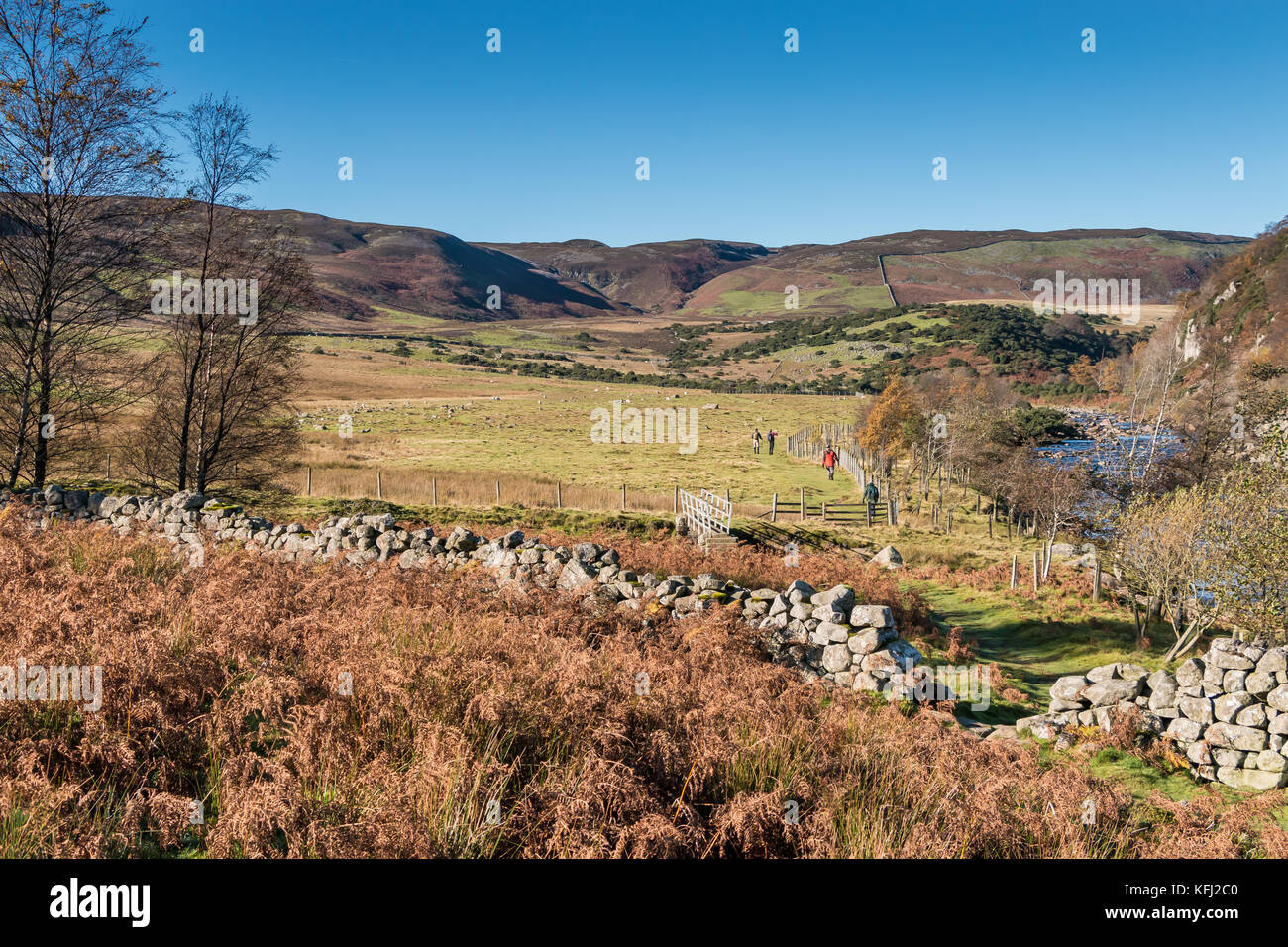 Teesdale landscape, the Pennine Way long distance footpath from Blea Beck to Cronkley Fell with a group of walkers - Stock Image