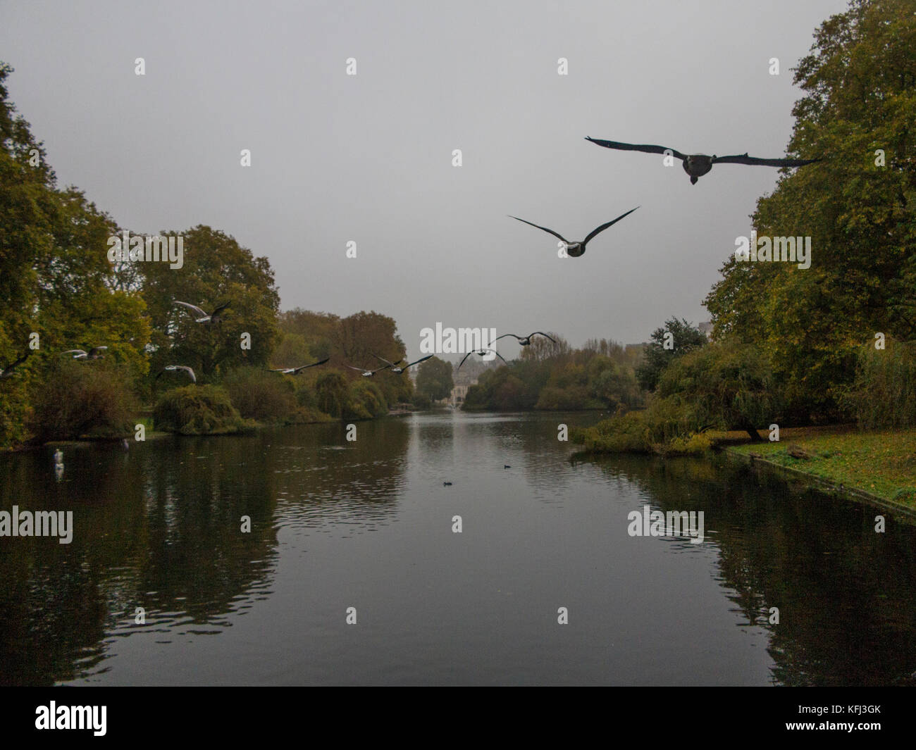 A gaggle of Geese flies over the lake in St James Park in V formation in London - Stock Image