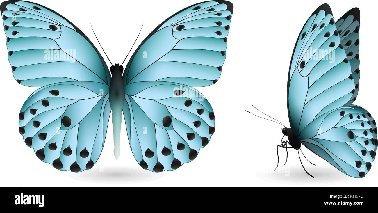 Set of colorful butterflies. Front and side view Stock Vector Art ...