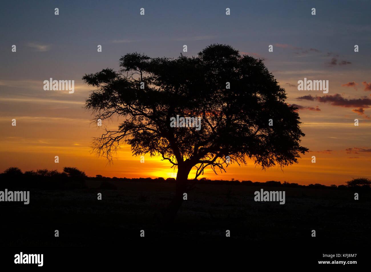 The sun begins to set at the Okaukeujo Waterhole in Etosha National Park on Saturday, Jan. 19, 2013 - Stock Image
