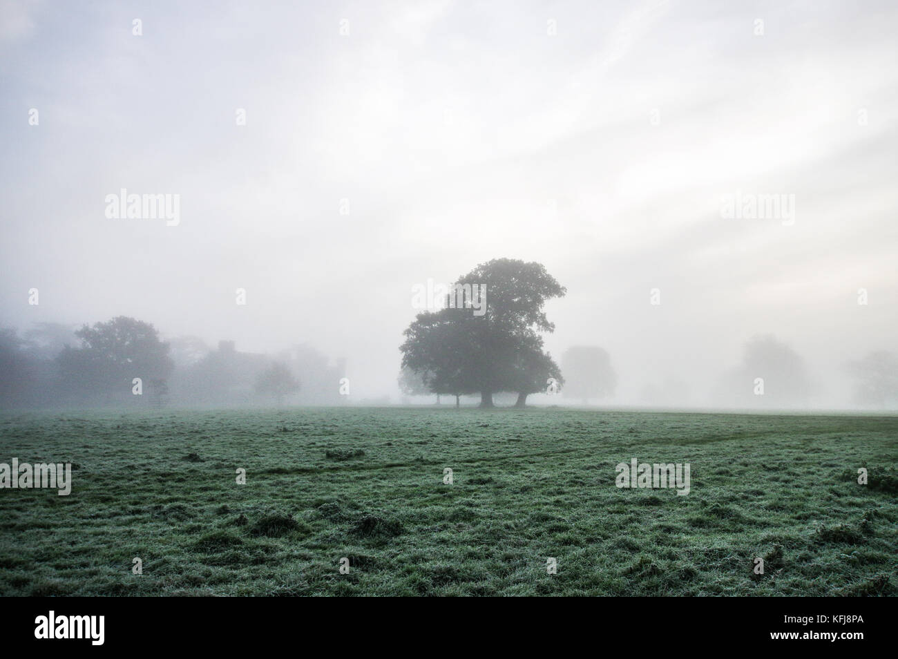 Thick autumnal fog surrounding Sussex countryside near Shipley Stock Photo