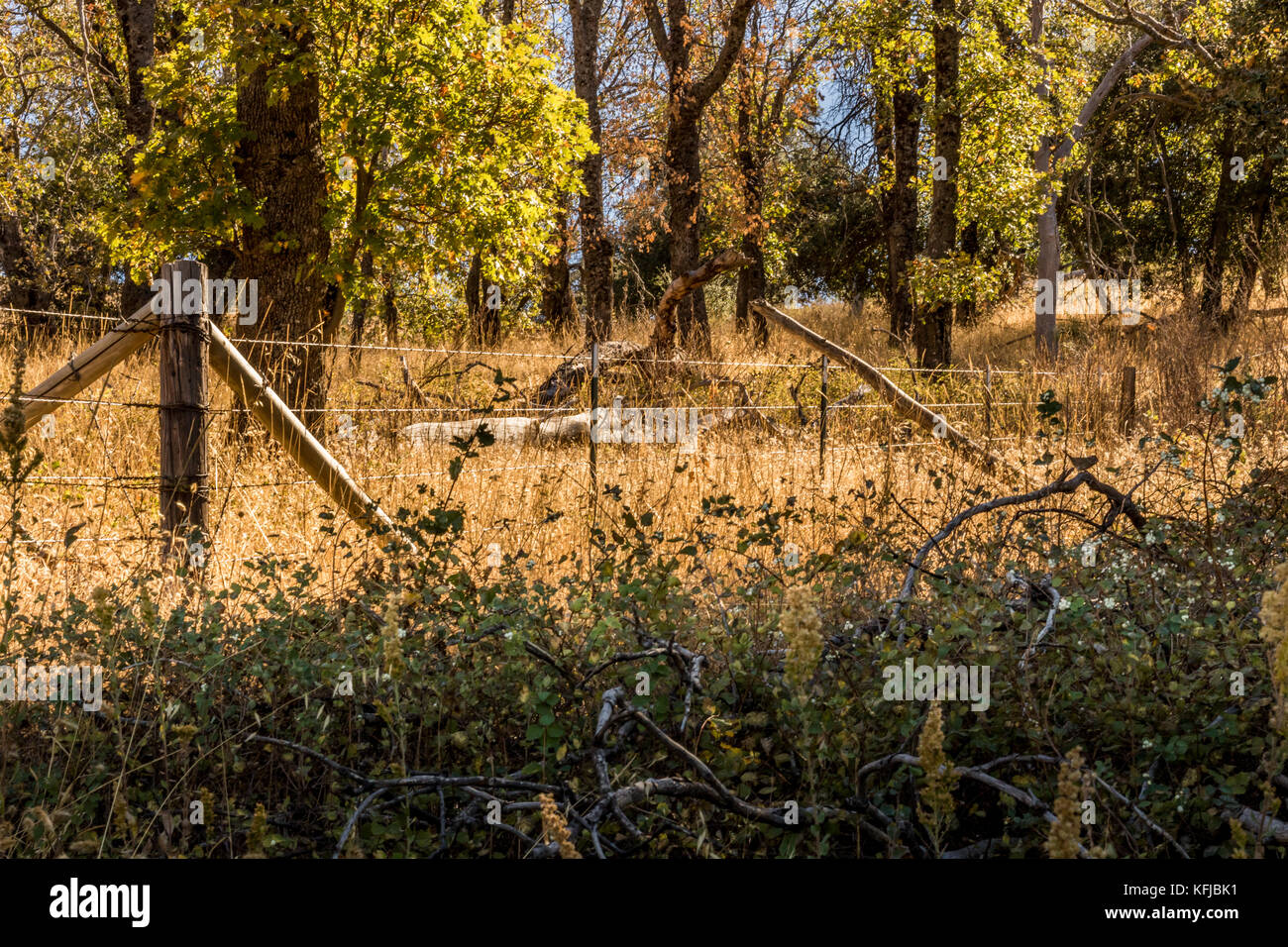 Rusted, old wood and barbed wire fence vanishing into distance, in country landscape of green shrubs in foreground, - Stock Image