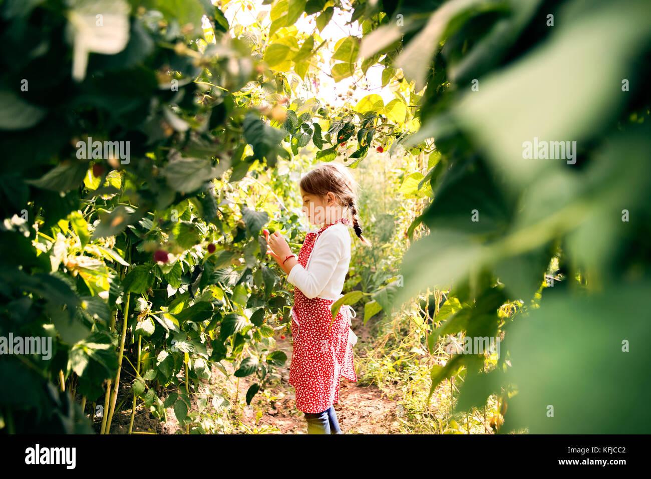 Small girl gardening in the backyard garden. - Stock Image