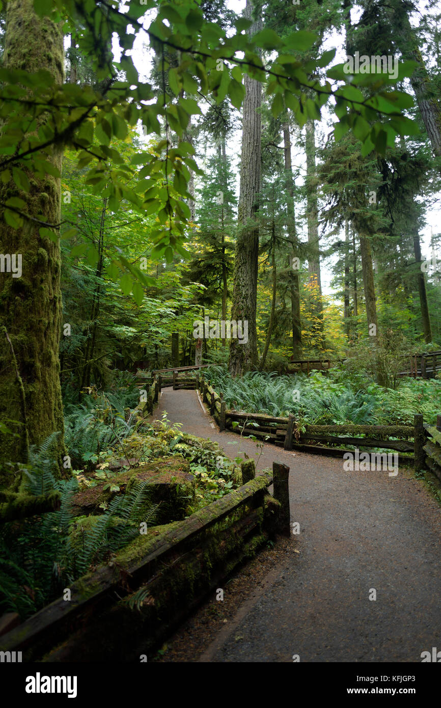 Trail path through Cathedral grove ancient forest of MacMillan Provincial Park, Vancouver Island, British Columbia, Stock Photo
