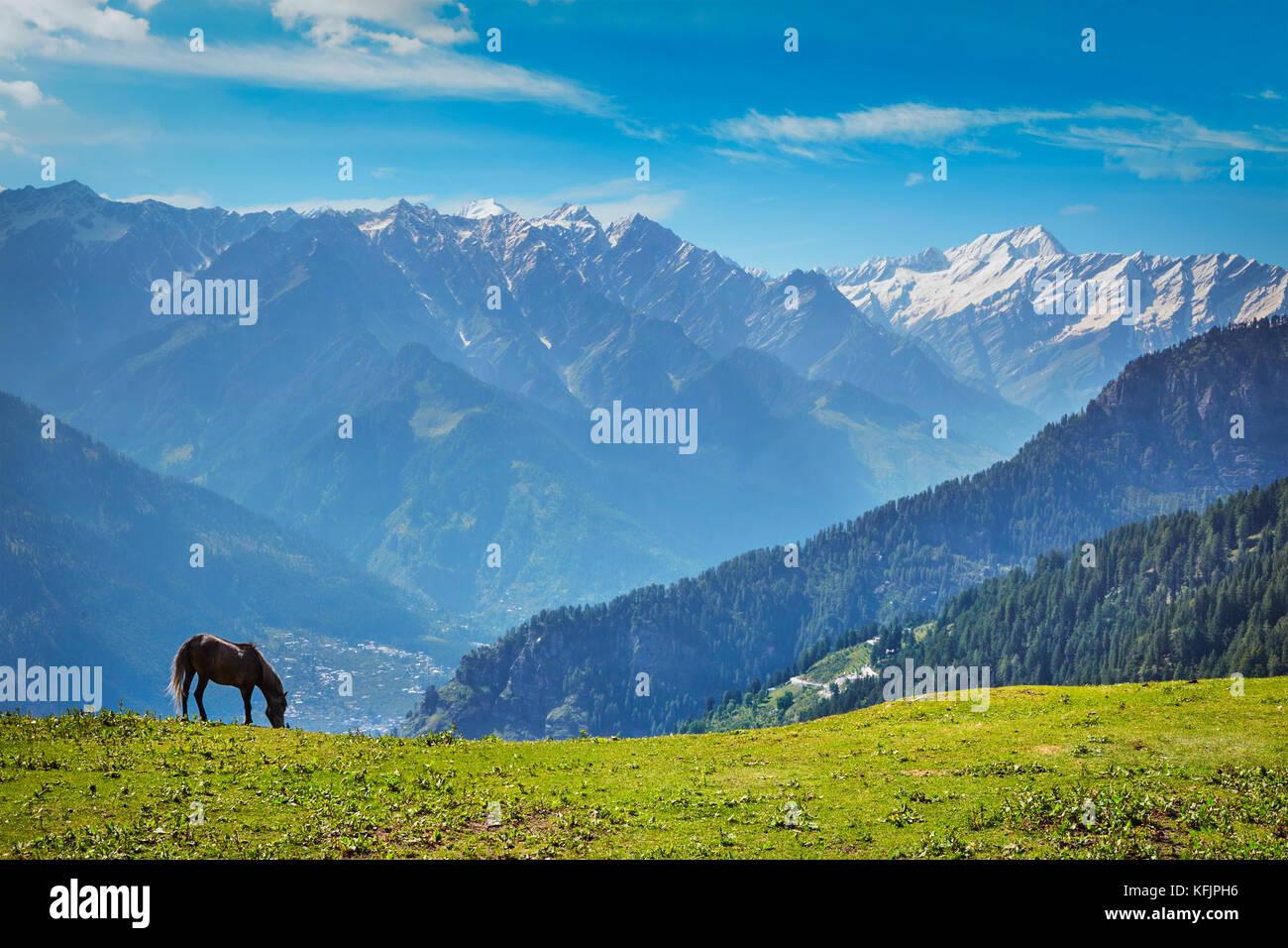 Horse in mountains. Himachal Pradesh, India - Stock Image