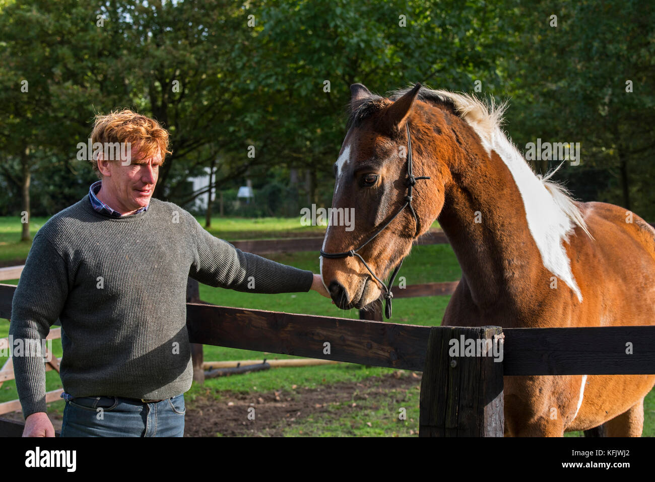 Man with Pinto horse / Quarter Horse stallion outside in field within wooden enclosure - Stock Image