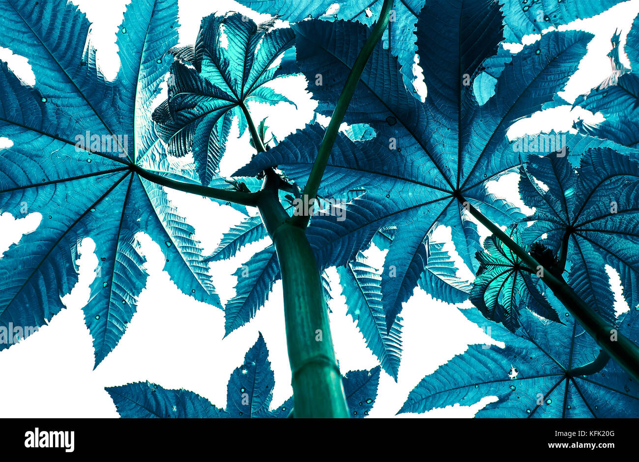 Blue branches of plants flower trees looking up on a white isolated blue branches of plants flower trees looking up on a white isolated background izmirmasajfo