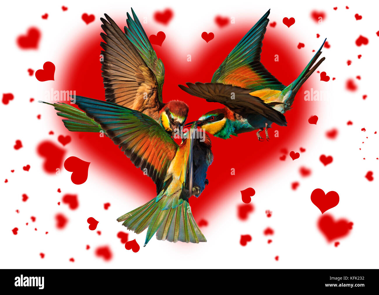 love triangle of birds fighting on the background of the hearts - Stock Image